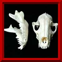 Bone Crafts